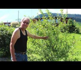 Sommerserie 2016 – das Video zu Teil 12